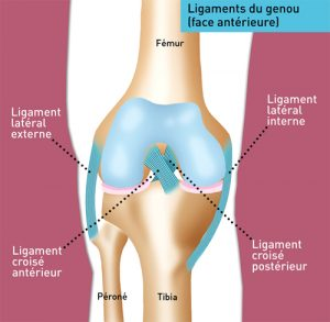 Je souffre d'une entorse du genou | Centre Orthopédique Santy